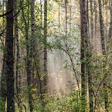 Рассветные лучи в лесу