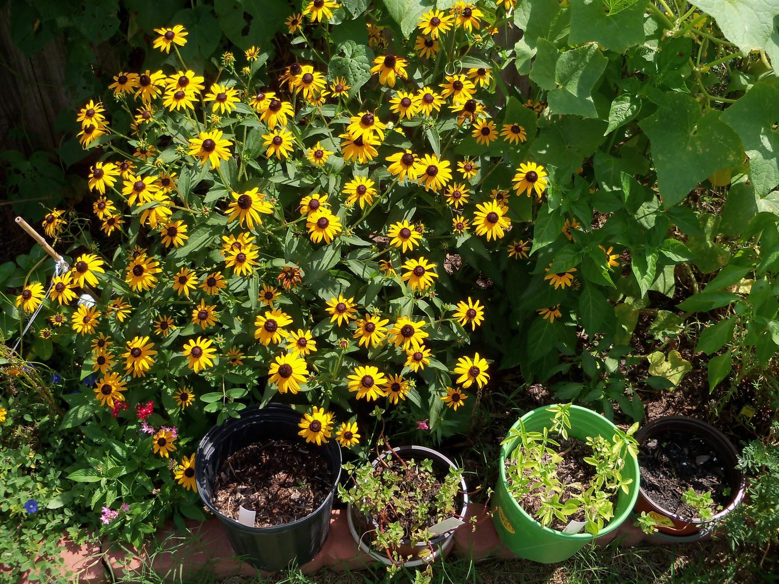 Gardening 2010, Part Three - 101_5105.JPG
