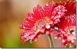 margaritas flores (55)
