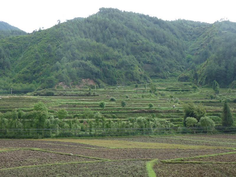 Chine .Yunnan,Menglian ,Tenchong, He shun, Chongning B - Picture%2B1024.jpg