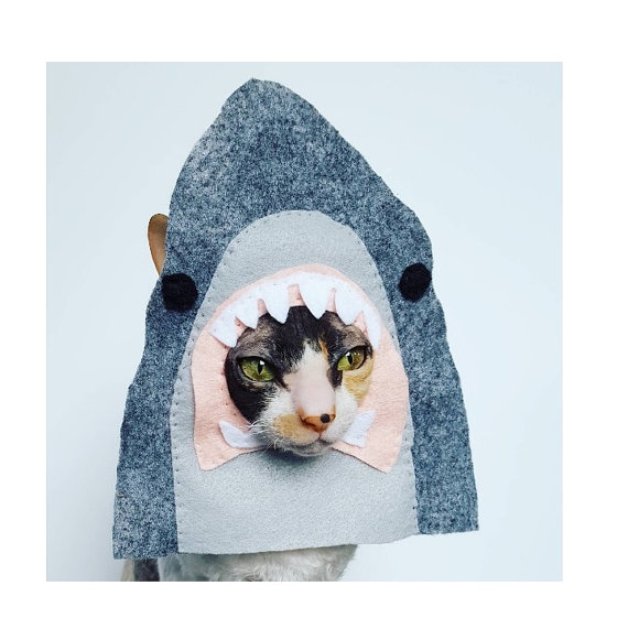 cat shark hat