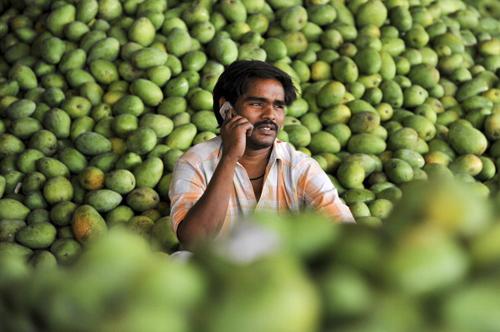 A mango wholesaler