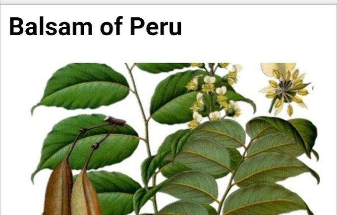 Botanical name of Balsam of Peru and its medicinal uses