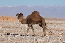 Maroko obrobione (158 of 319).jpg