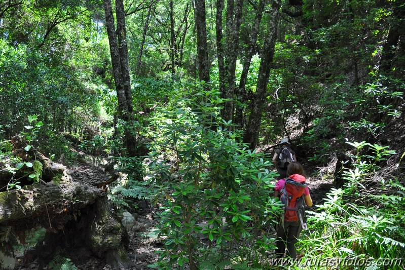 En el corazón del bosque III