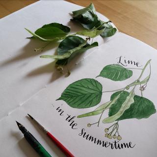 www.AliceDrawsTheLine.co.uk :: Lime  in the Summertime
