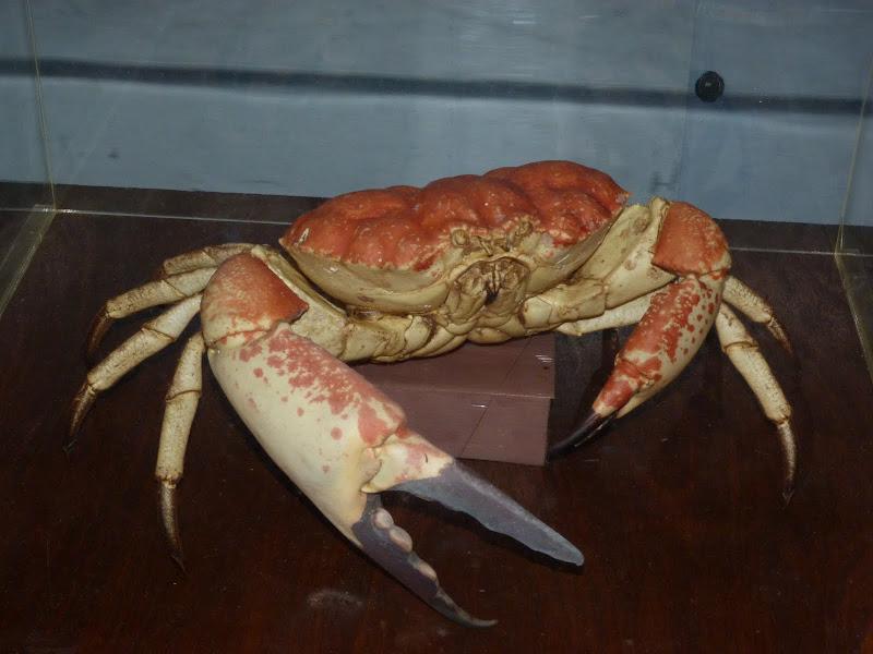 TAIWAN.Toucheng .musée du crabe situé au Pei Kan Resort, surfers,maison Japonaise du chef de gare - P1080713.JPG