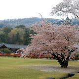 2014 Japan - Dag 8 - jordi-DSC_0488.JPG