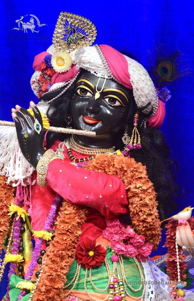 ISKCON GEV (Wada) Deity Darshan 28 Jan 2016 (10)