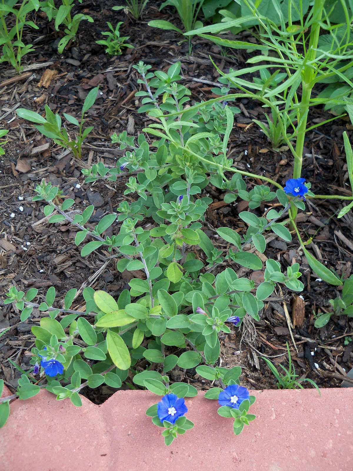 Gardening 2010, Part Two - 101_3001.JPG