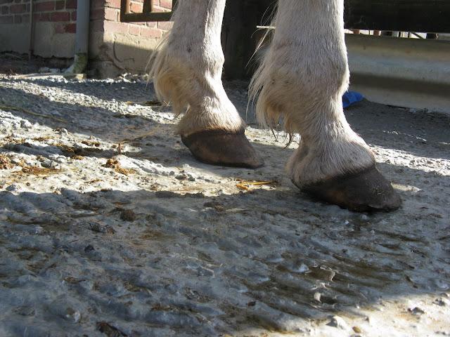 Besoin d'avis et conseils sur les pieds de mon cheval IMG_1937