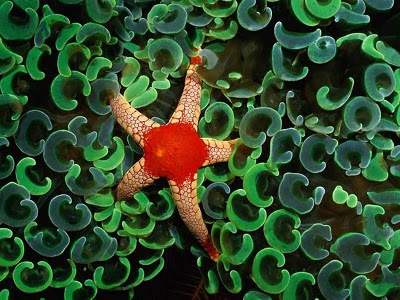 صور جميلة جدا لنجوم البحر-طبيعة وحيوا-منتهى
