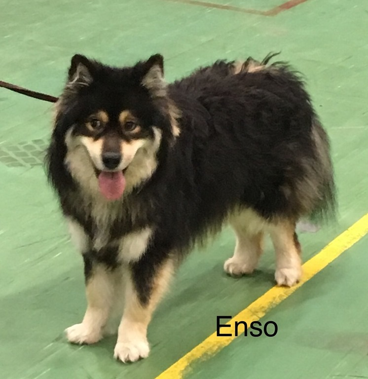 [1811+Enso+p%C3%A5+utstilling%5B3%5D]
