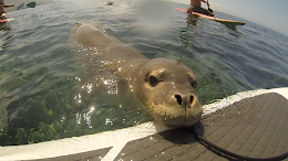 Friendly Monk Seal