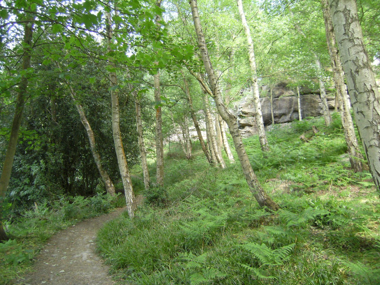 DSCF8132 The Lower Path at Harrison's Rocks