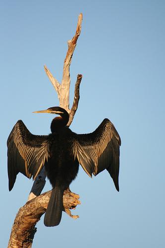 Животный мир Национального парка Какаду