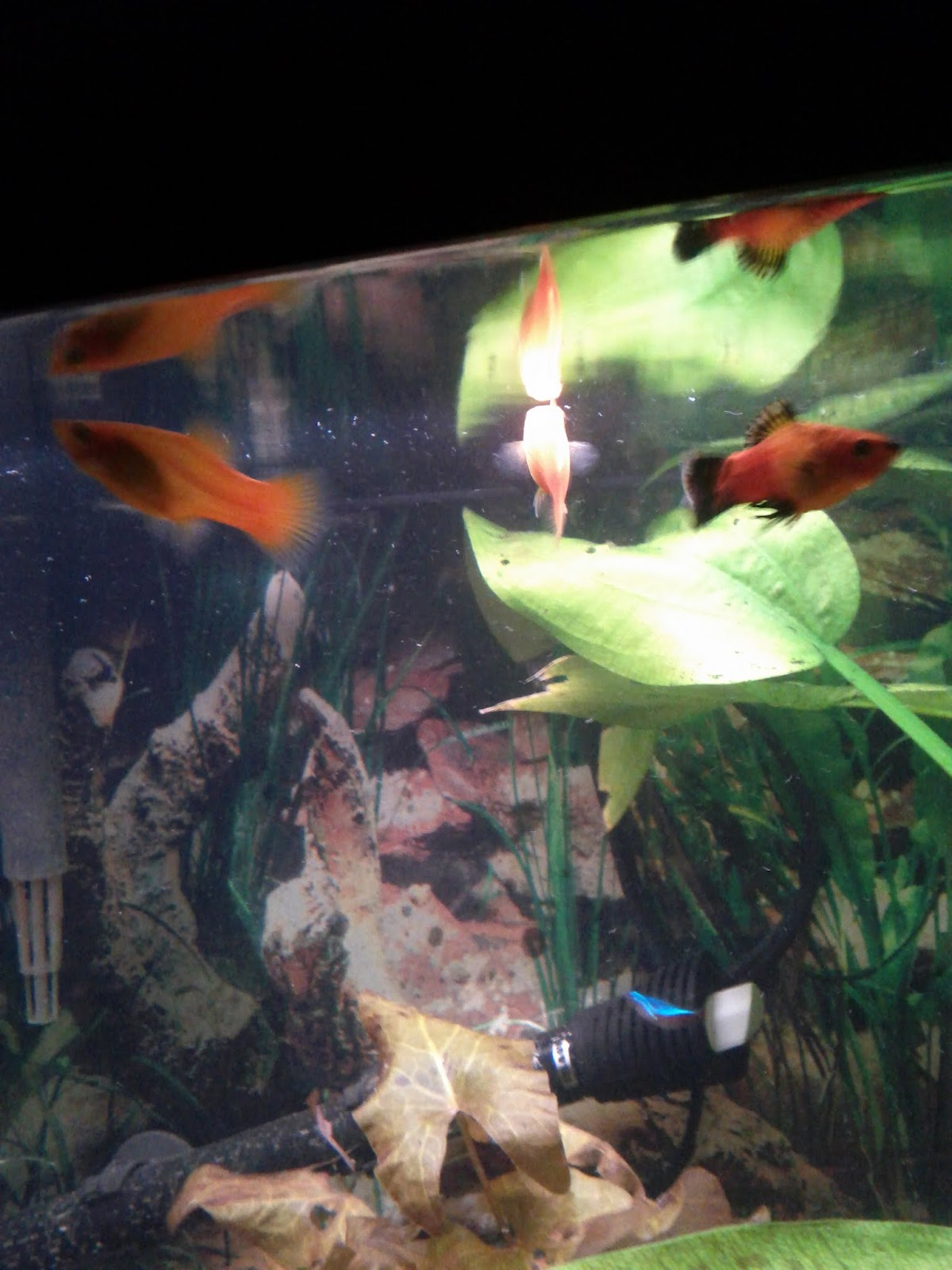 Fish - IMG_20120930_212018.jpg
