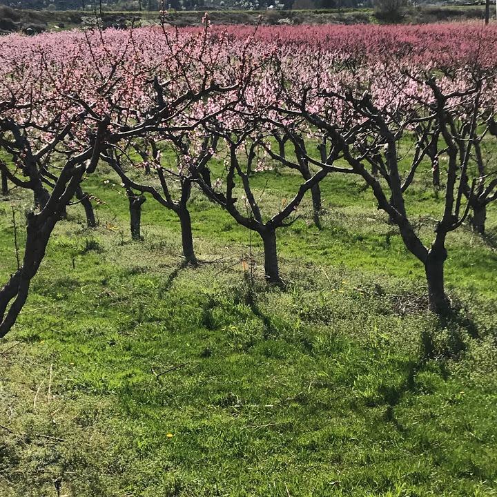 [blossom+view+2+April%5B6%5D]