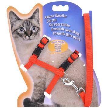 cat-adventure