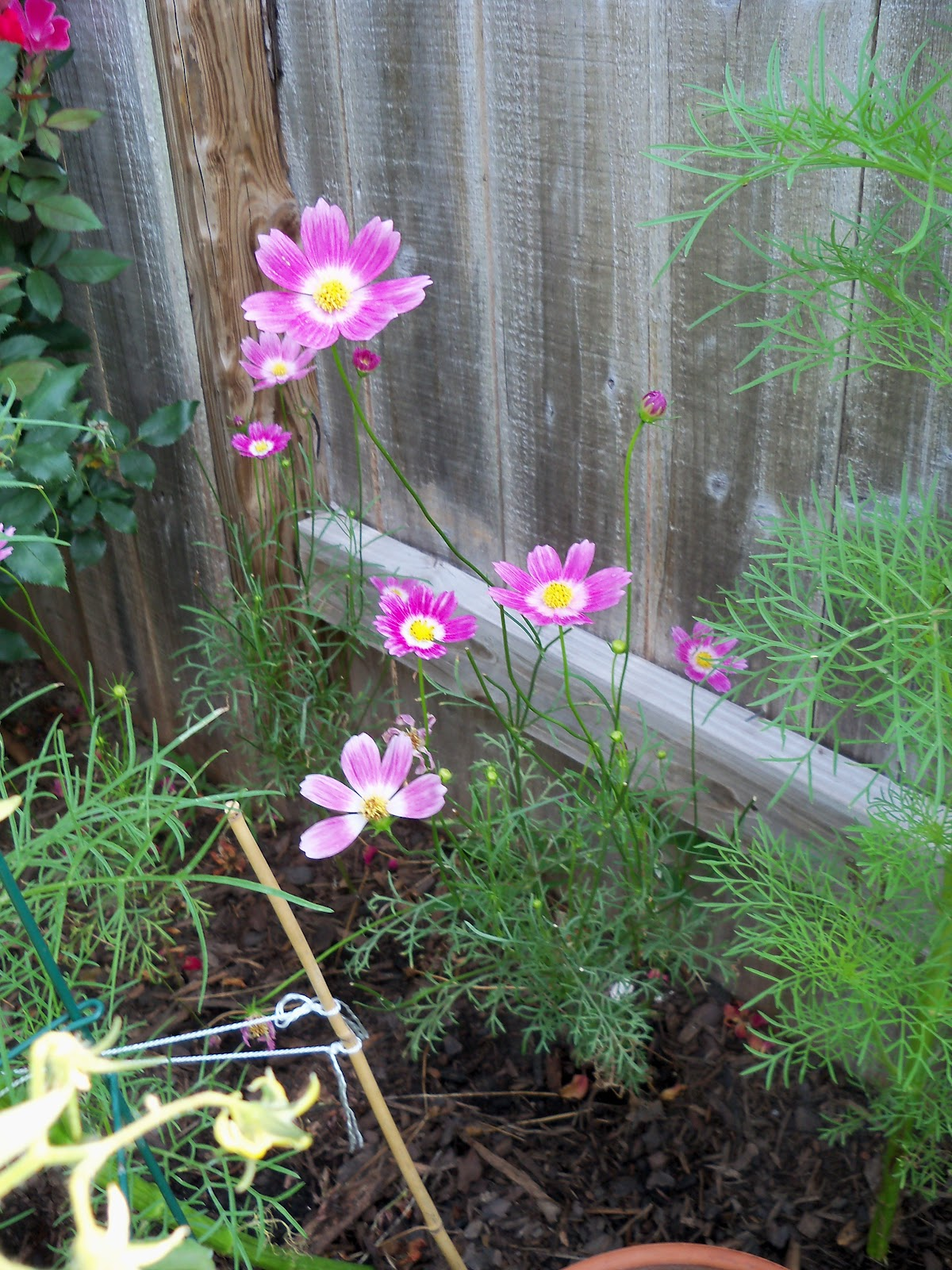Gardening 2010, Part Two - 101_3087.JPG