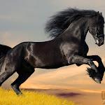 Animal 007_1280px.jpg