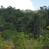 La forêt devant les Carbets de Coralie (Crique Yaoni), 30 octobre 2012. Photo : J.-M. Gayman