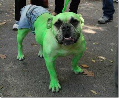 disfraces divertidos para perros  (28)