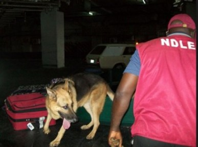 NDLEA Arrests 59-year-old Man with 25kg of Ephedrine at Kano Airport