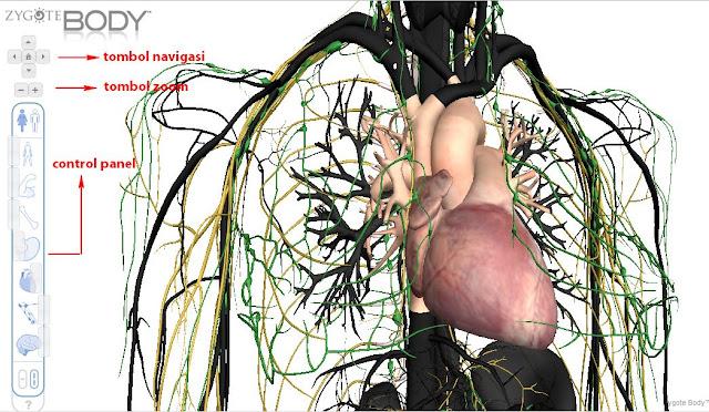 Menjelajah Anatomi Tubuh dengan Google Body Browser