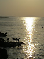 Pulau Ubin (SG), 2014-02-22