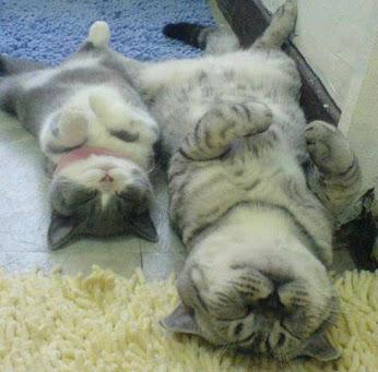 https://lh3.googleusercontent.com/-JCzGsgEvz5k/UgRynblYVdI/AAAAAAAA_Eg/2auRH3sIWdY/w346-h341/sleeping+cats....jpg