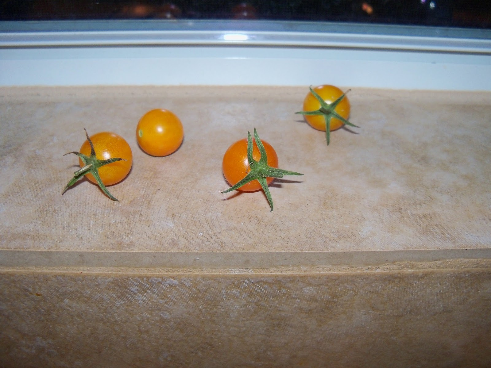 Gardening 2011 - 115_0861.JPG