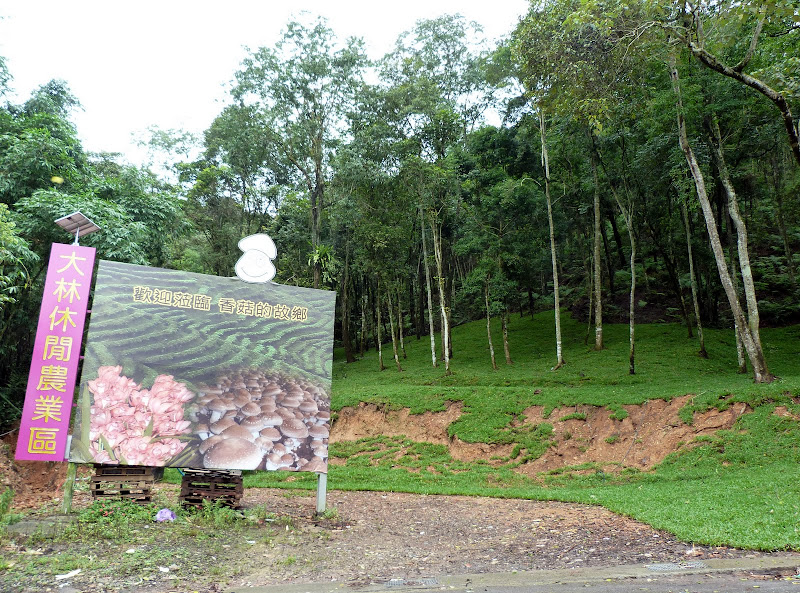 PULI . De Puli a Sun Moon Lake et un village Thao .J 6 - P1150757.JPG