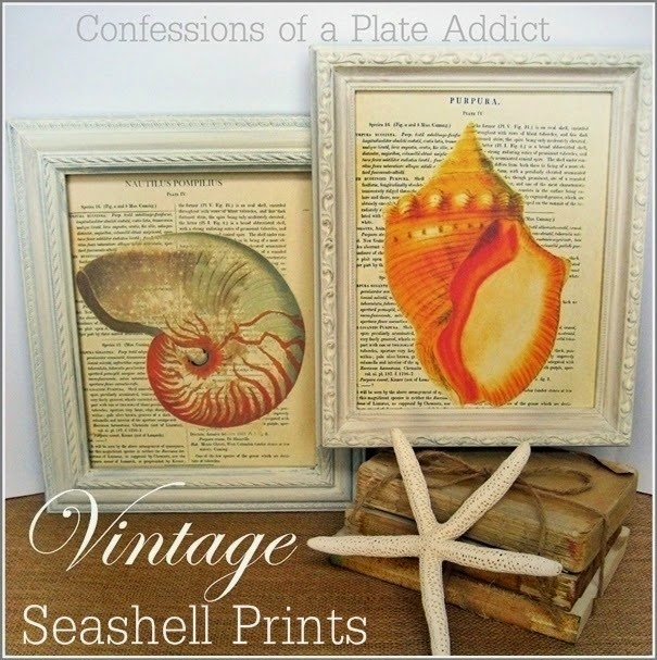 CONFESSIONS OF A PLATE ADDICT Framable Vintage Seashell Prints