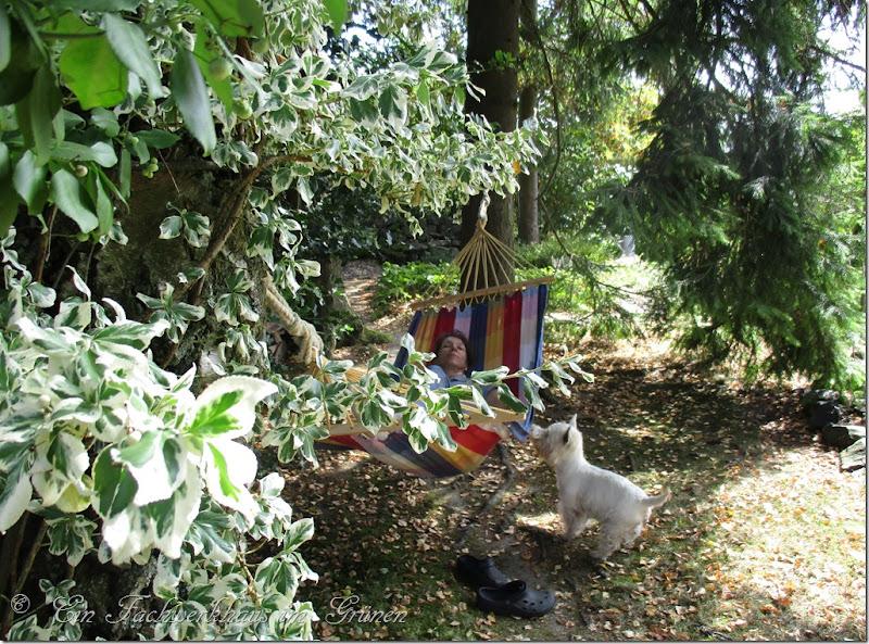 Sitzplatz, Garten, Hängematte