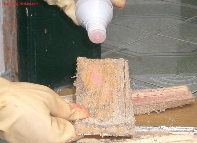 Phun thuốc diệt mối sinh học PMC90 lên miếng mồi nhử diệt mối tại Quận 5