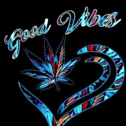 user Paula Krause apkdeer profile image