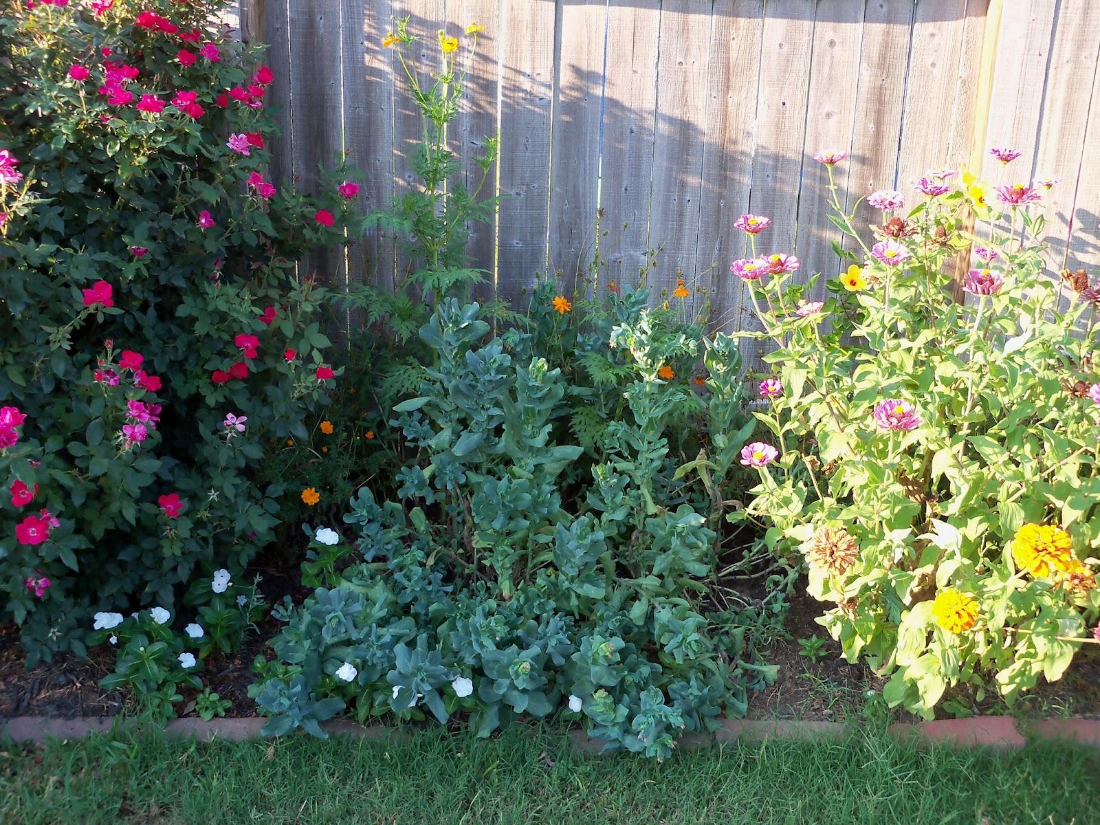 Gardening 2011 - 100_9223.JPG