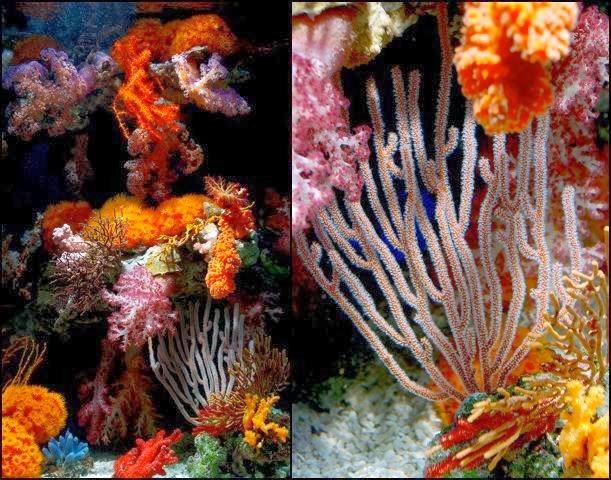 Alimetanción Corales