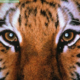 ojos de tigre.jpg