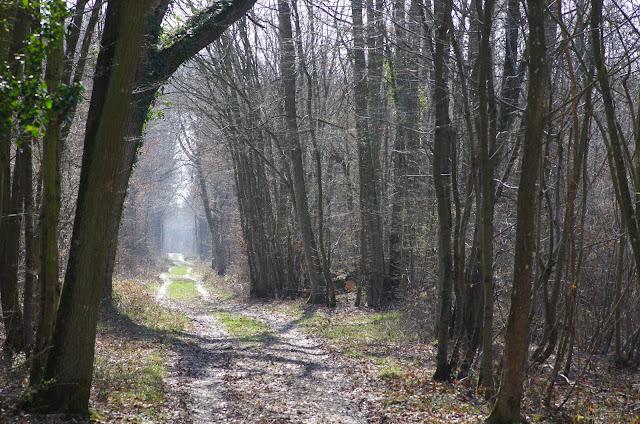 Les Hautes-Lisières (Rouvres, 28), 16 mars 2012. Photo : J.-M. Gayman