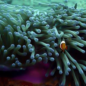 Tioman by Rouslan Podroutchniak - Landscapes Underwater