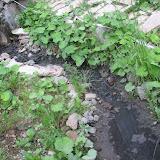 """В результате  """"прочистки"""" многолетняя грязь была спущена в ручей"""