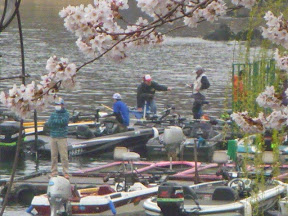 桜満開の中、接岸1