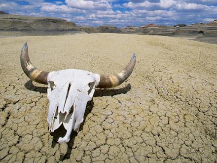 Ο θερμότερος Ιούνιος όλων των εποχών για πολλές χώρες του κόσμου - Δυσοίωνες οι προβλέψεις της NASA