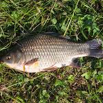 20140726_Fishing_Sergiyivka_041.jpg
