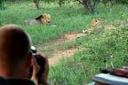 Vi så også dette løvepar i Thsukudu.