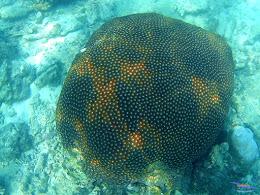 family trip pulau harapan, 1-2 agustus 2015 gopro 27