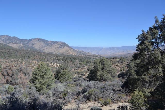 pinyon pines and sage brush