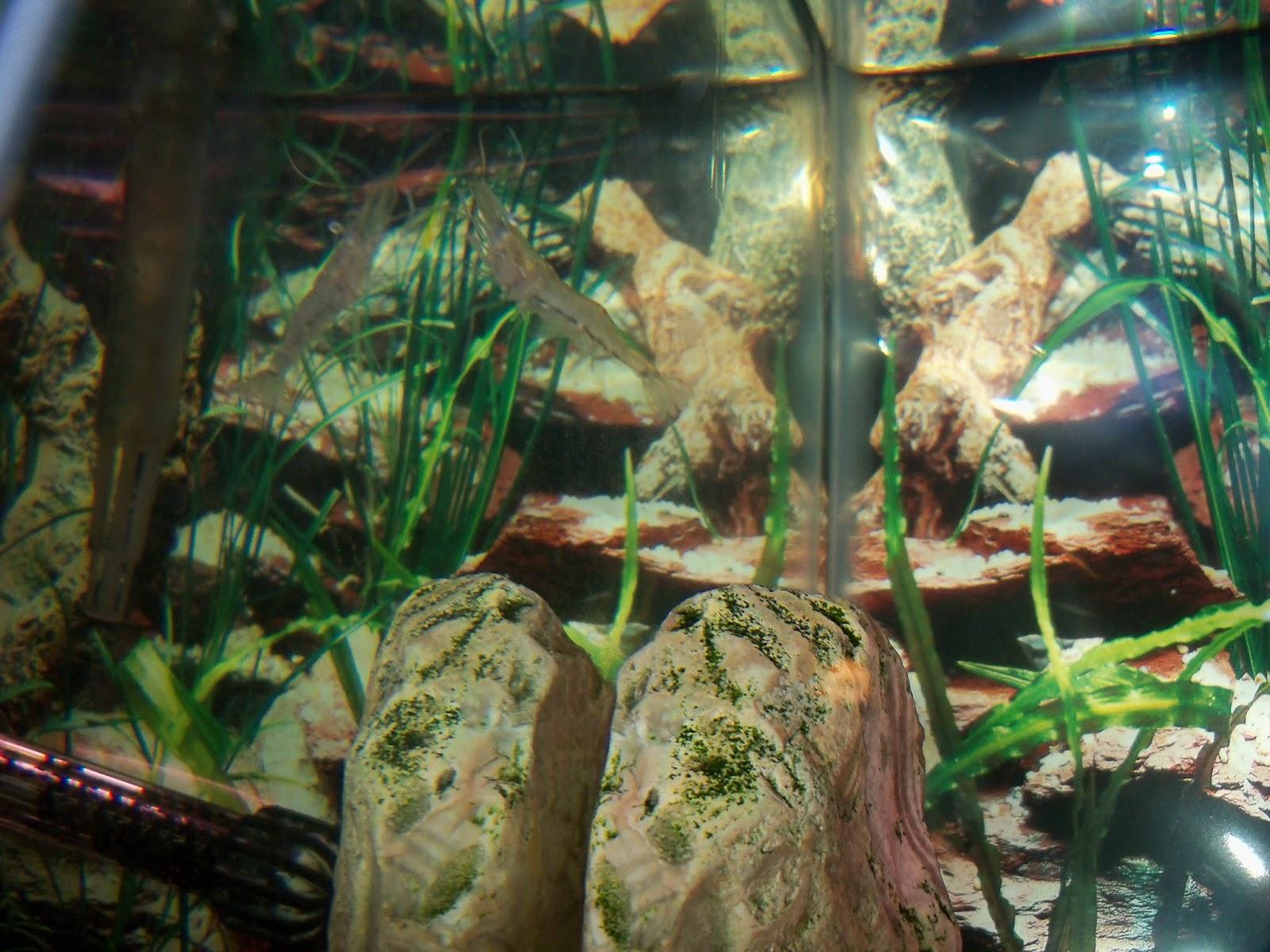 Fish - 115_6574.JPG
